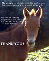 Latest Photo by ANOTHER CHANCE EQUINE RESCUE