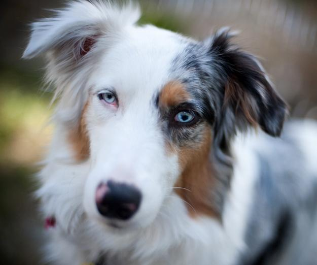 My Deaf/Blind Aussie, China
