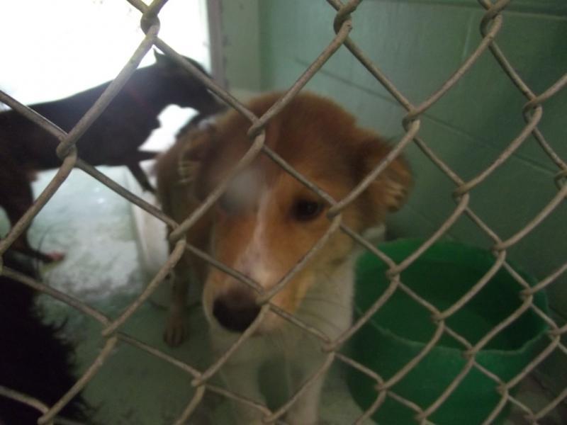 Bartholomew at the shelter  http://thedogliberator.com/bartholomew/