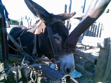 our Donkey Project is very important - there are thousands of working donkeys in South Africa