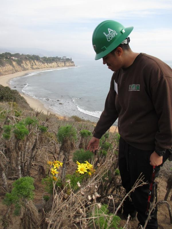 LA RiverCorps, Point Dume State Beach. Habitat restoration & Trail Maintenance with CA State Parks