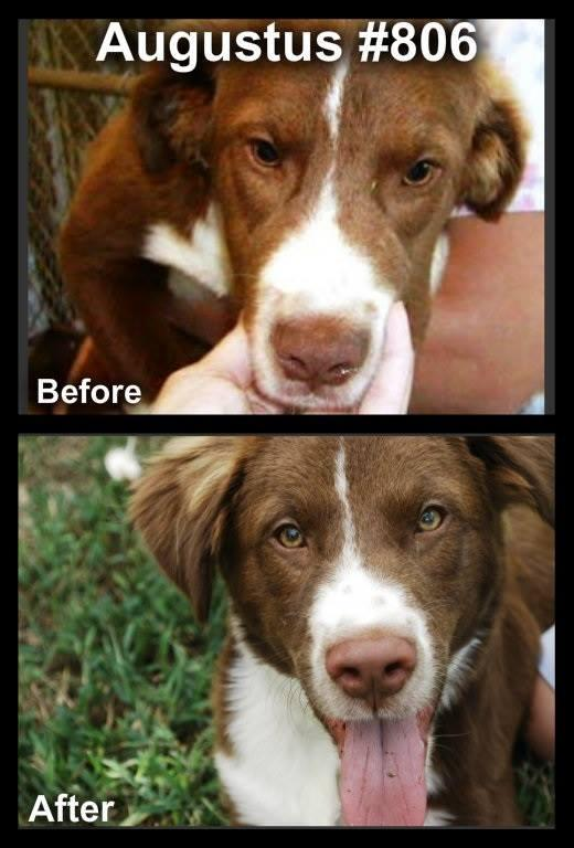 Before and After of Augustus #806, now Charlie