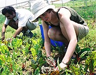 CBF's Clagett Farm is a working community supported agriculture (CSA) farm in MD.