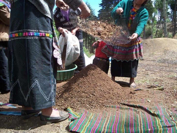 Soil Preparation is Imperative in Successful Reforestation