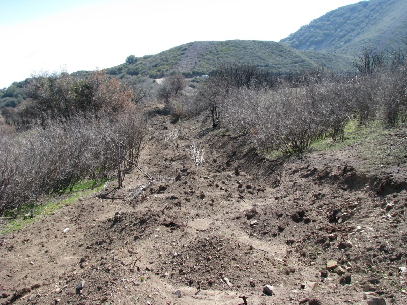 Habitat Recovery can sometimes be stunted by certain types of fire suppression activities