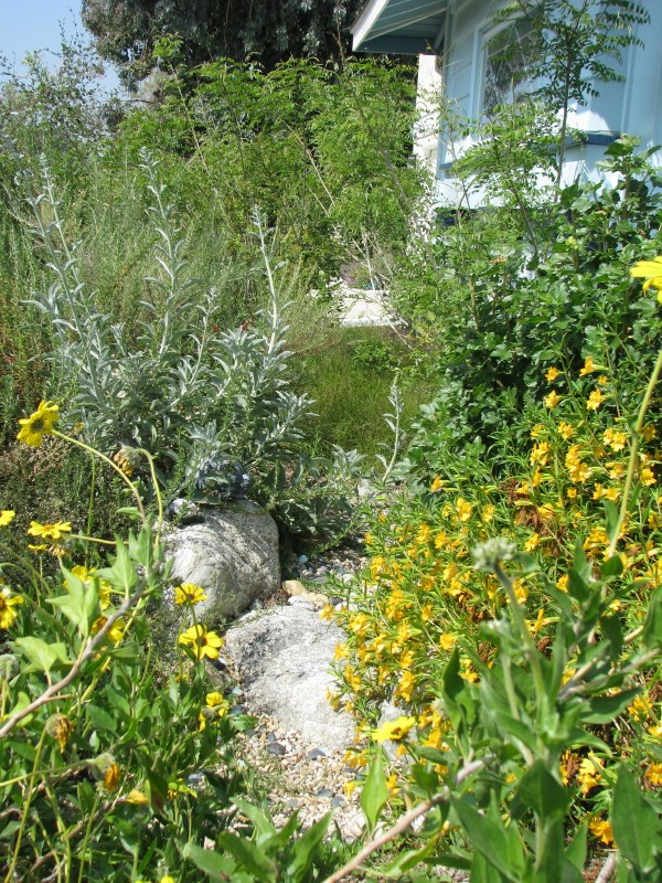 Native Plants can reduce water use, runoff and chemical use while providing natural beauty