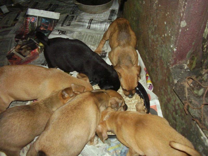 AKI funds help Kingston Community Animal Welfare feed 100s of street dogs and cats each week