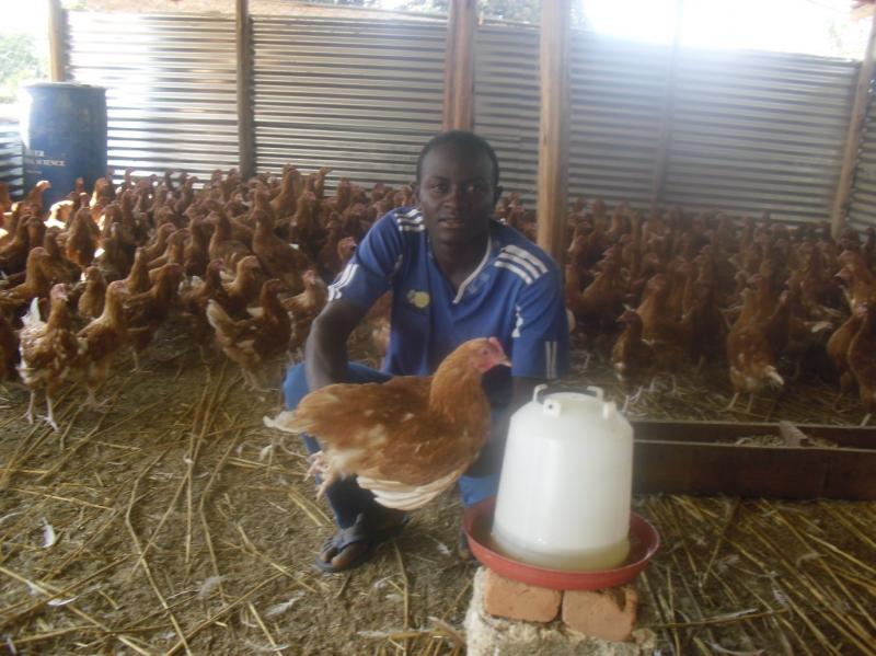 Poultry Project, Zimbabwe, 2013