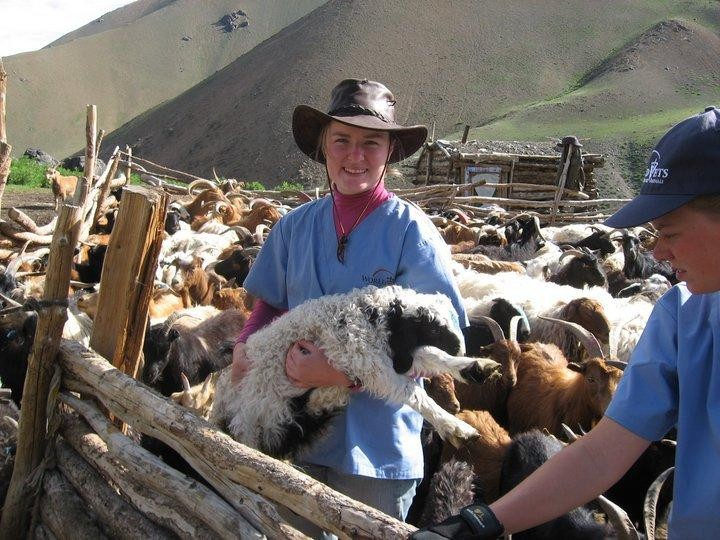 World Vets brings veterinary care to livestock that would normally go without.  (picture in Mongolia