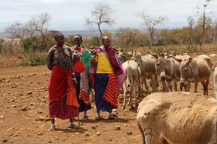 World Vets brings veterinary care to the donkeys belonging to the Masai tribe in subsahara Africa