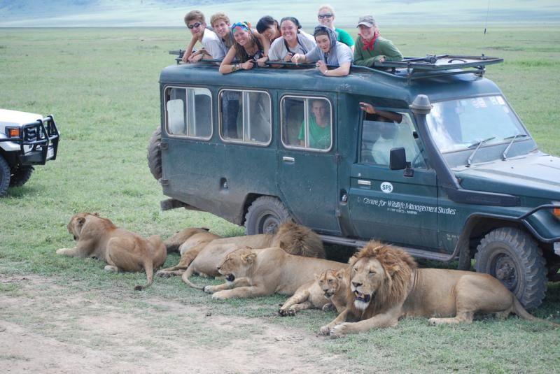 Lions with truck in Kenya
