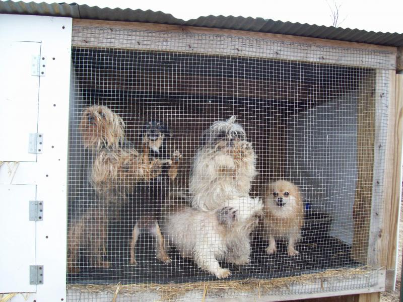 Iowa Puppy Mill
