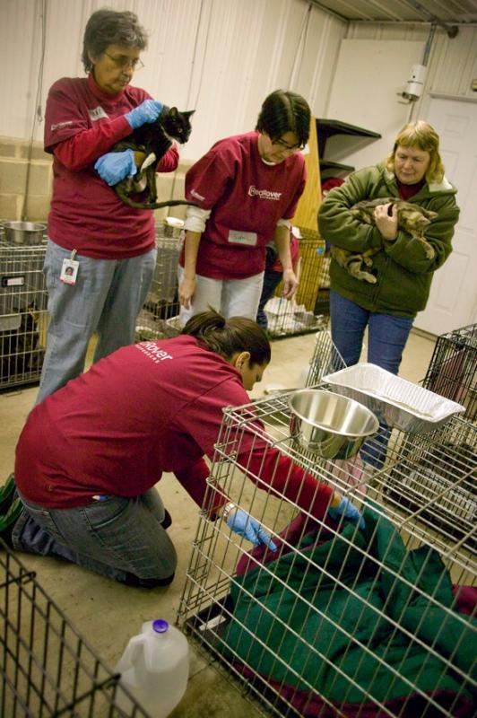 In November 2012, RedRover sent trained volunteers to care for animals affected by Superstorm Sandy.