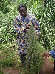 Benin: Natural Healer
