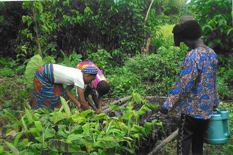 ABEMO Women Farmers Harvesting C