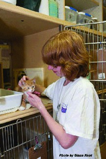 Our PetSmart Adoption Center is staffed entirely by volunteers