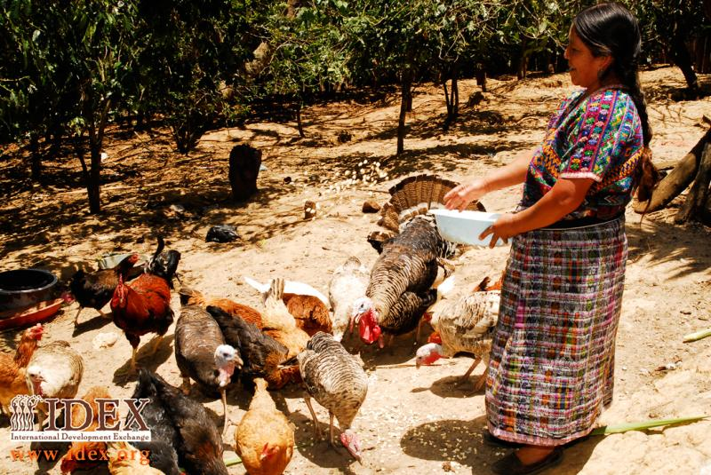 IDEX partner APROSADSE in Guatemala empowers women in rural villages to sustain their families.