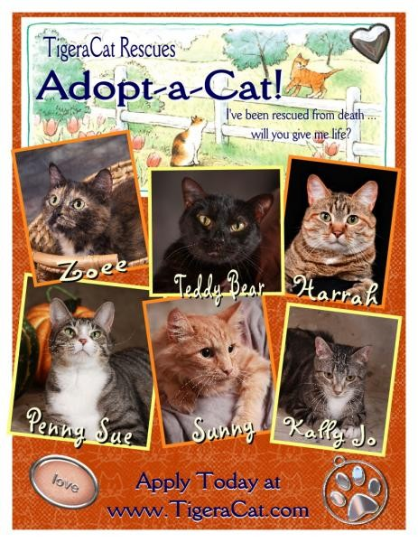 Adoption Flyer Sample