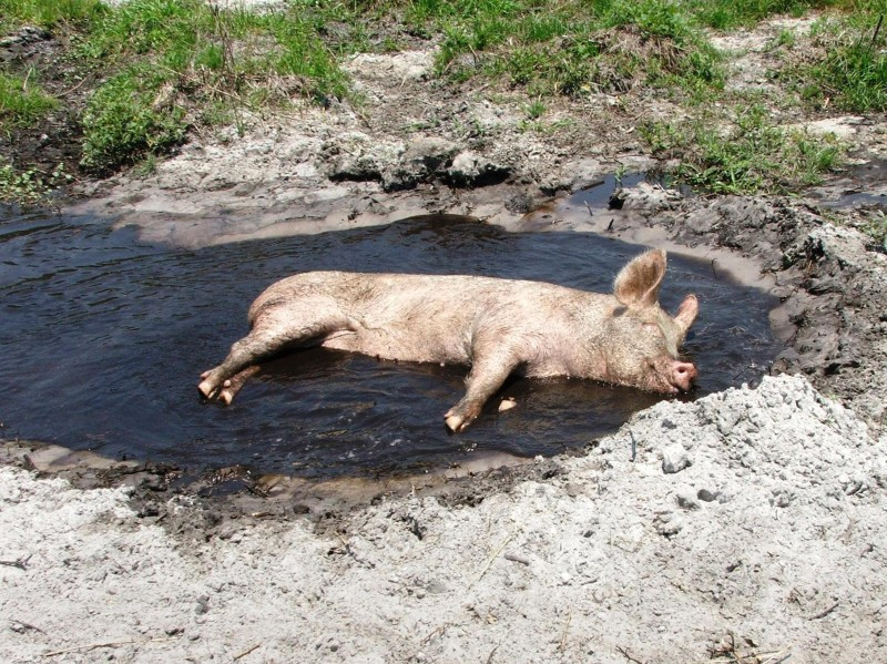 Nothing Like A Cooling Mudbath!