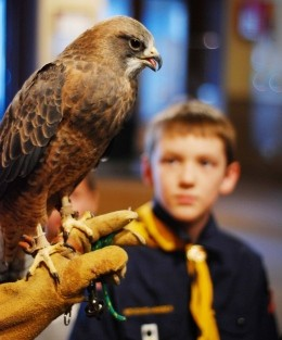 HawkWatch International provides educational programming to nearly 20,000 students each year.
