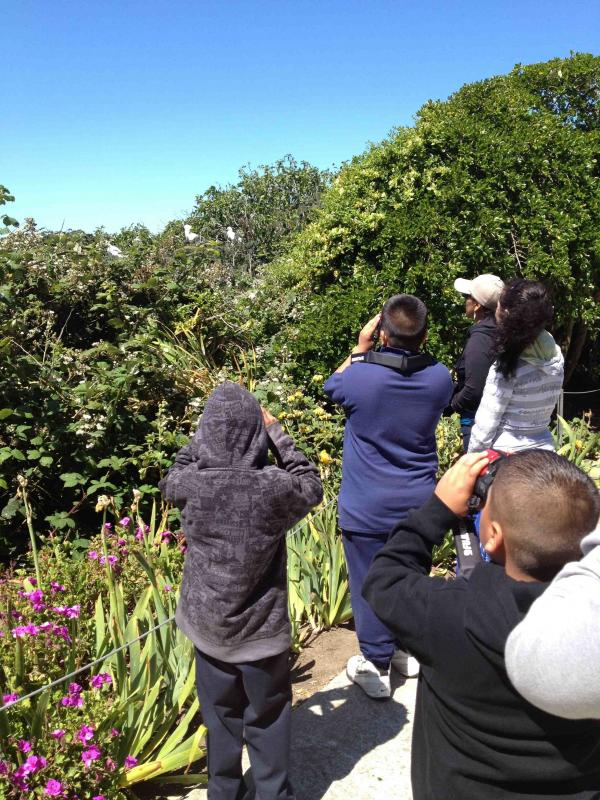 Our Eco-Education programs introduces students to an egret colony on Alcatraz
