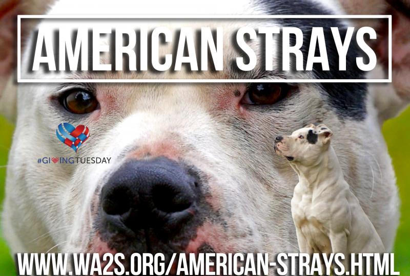 The American Strays Project