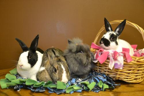 The Bunnies in Baskets Therapy Rabbits
