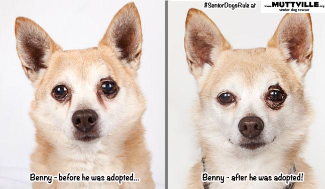 Benny: Before & After, adopted!