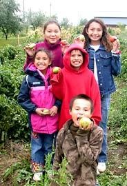 Promoting self-sufficiency and good nutrition through organic gardens.