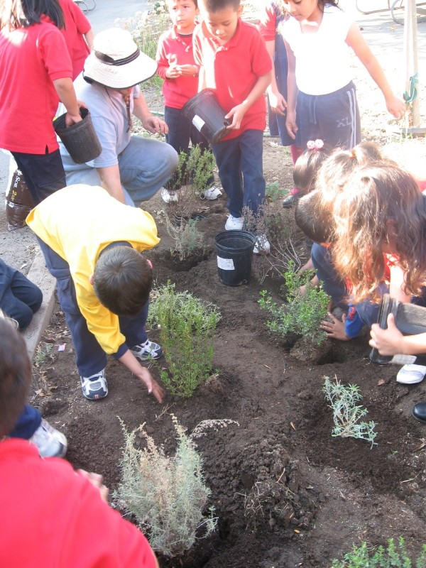Habitat gardening can open the eyes of children and their teachers to the natural world