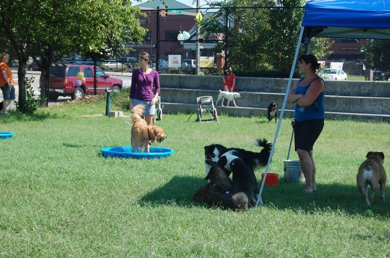CLC helps create nonprofits, and helps them create greenspace, like Canton Dog Park.