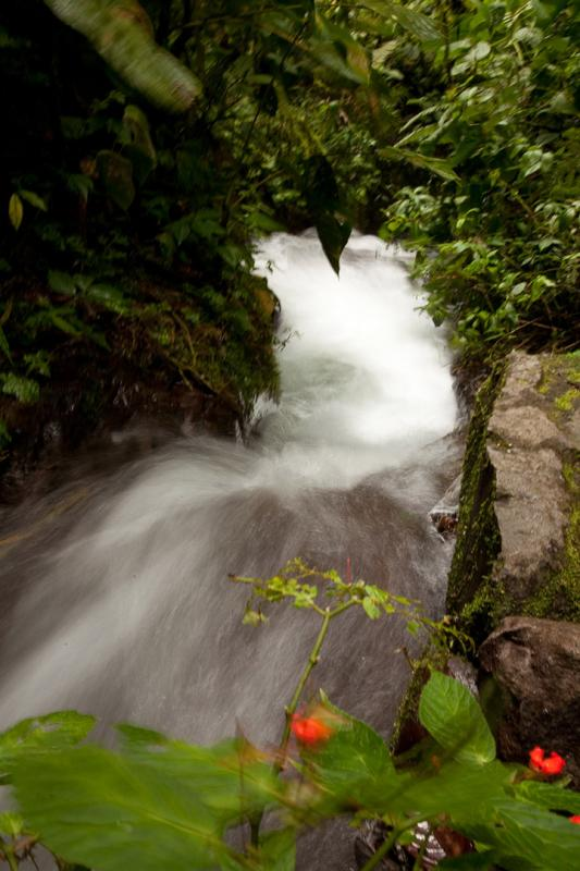 Protecting water resources in the Ecuadorian cloud forest