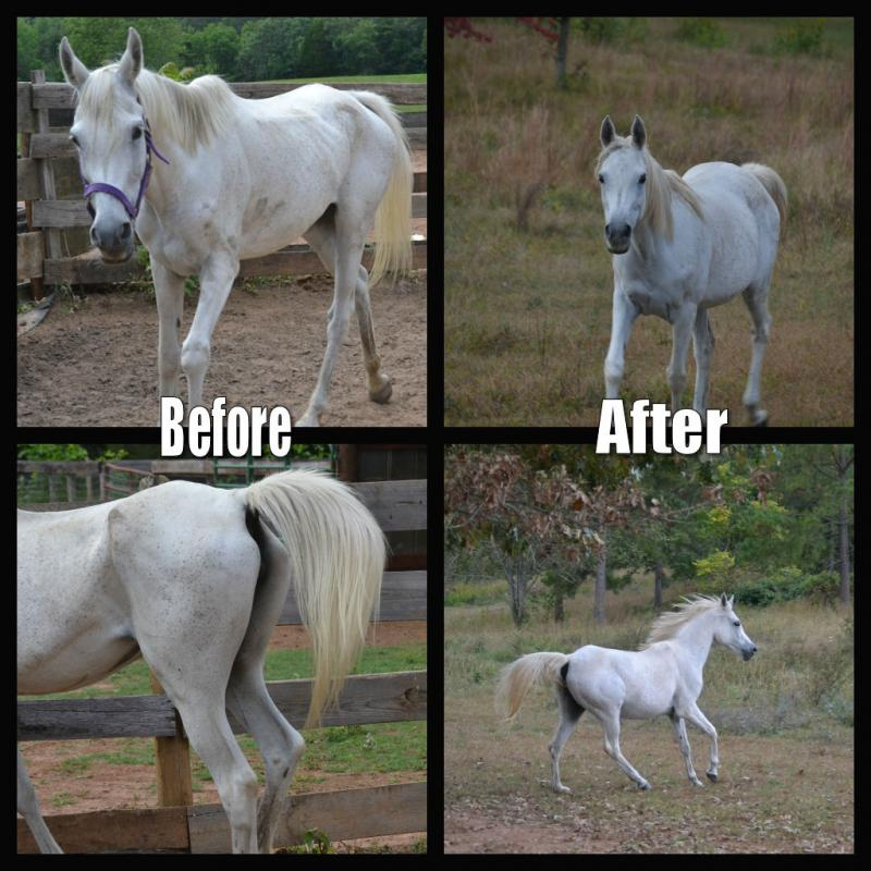 Cheyenne when she came to us and a few months later.