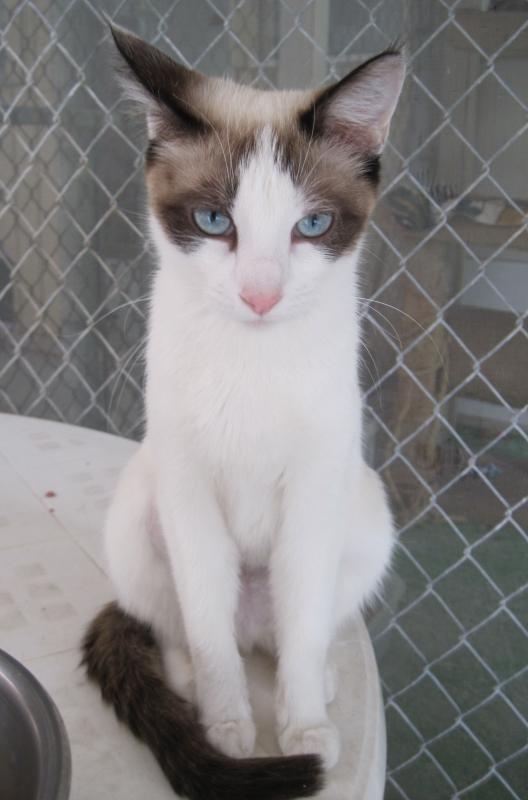 Cleo, a sweet mama kitty.