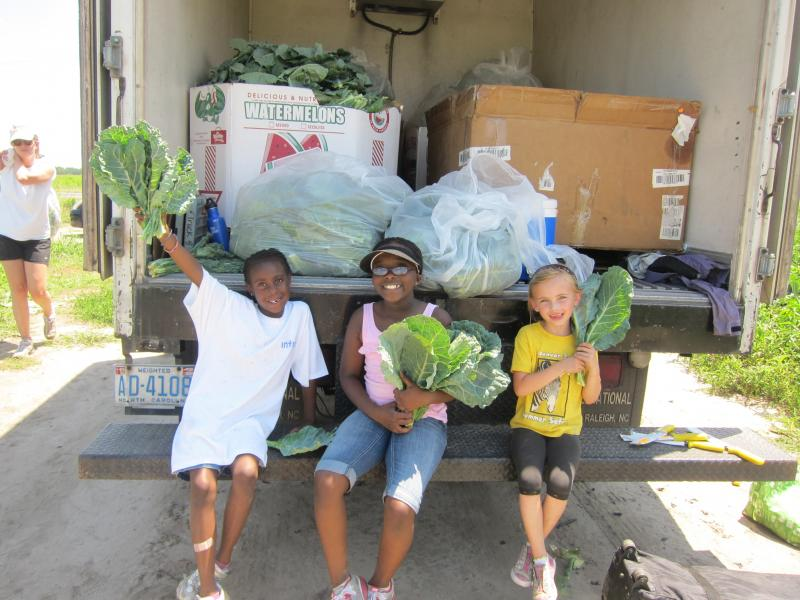 Gleaning Collards for distribution to families in need