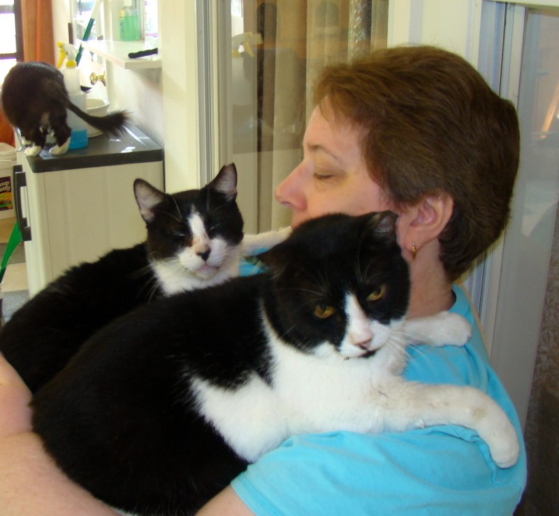 Jane with Luke and Davey-. Davey is FIV+ but Luke doesnt