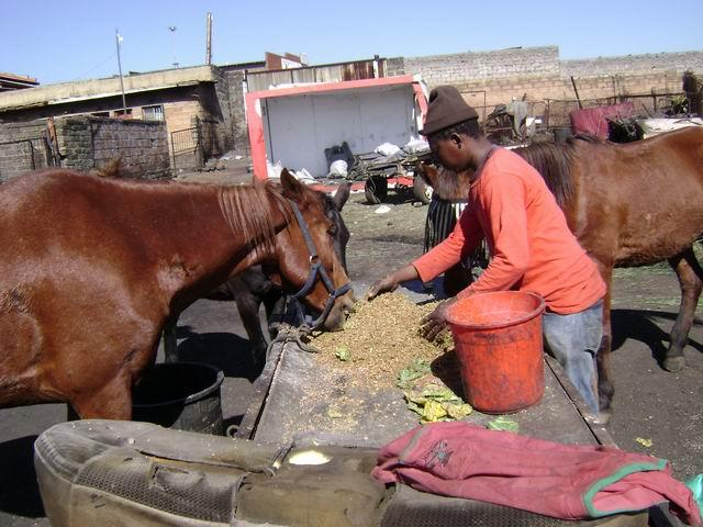 life isn't always easy for a coalyard horse - but we help!