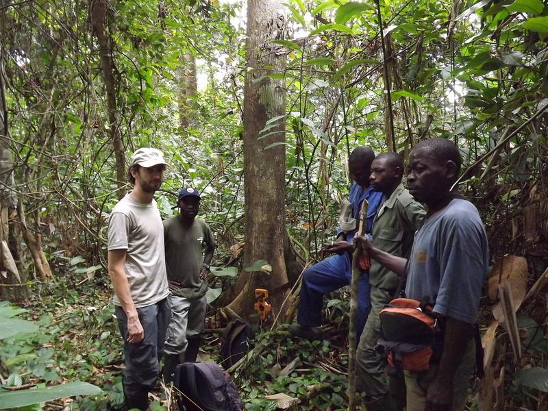 conducting surveys for endangered gorillas in Congo