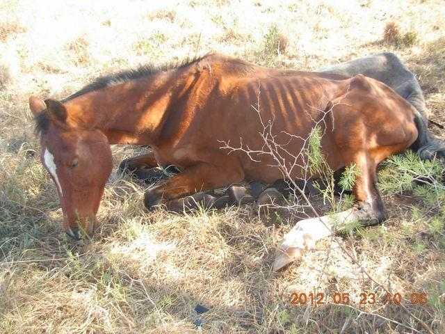 we rescue and rehabilitate horses that have been abused and neglected