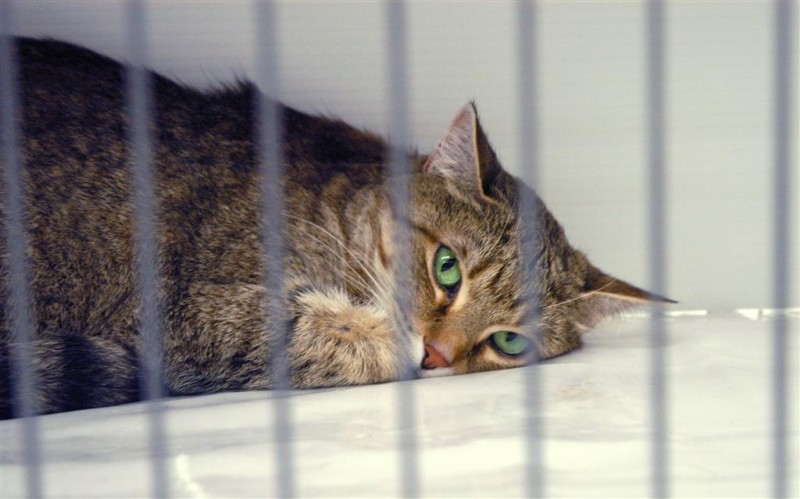 The Cat Network has help place over 7000 homeless cats since 1996.