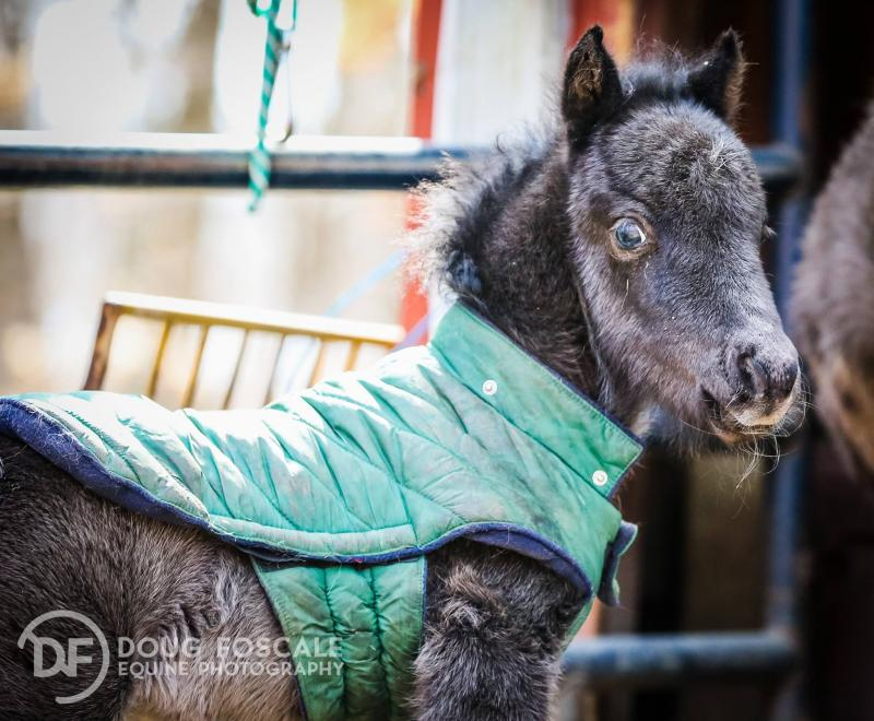 Puff- born to a mare rescued from auction