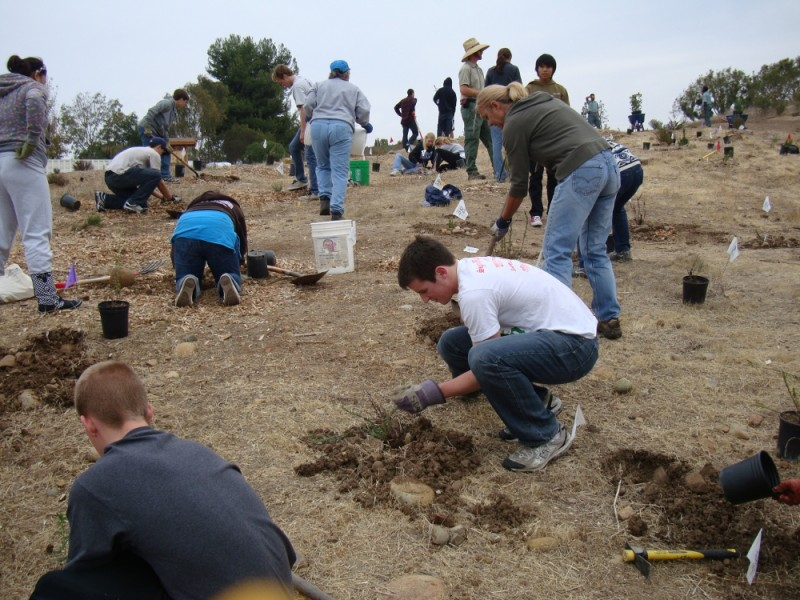 San Diego volunteers plant 250 trees.
