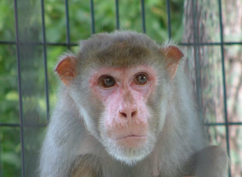Dewey the rhesus macaque has one of the sweetest faces around.