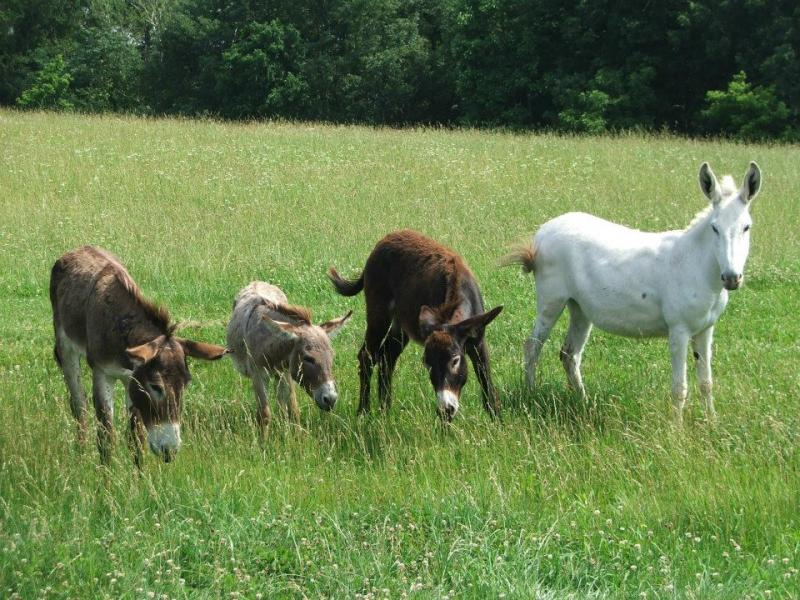 Donkeys available for adoption
