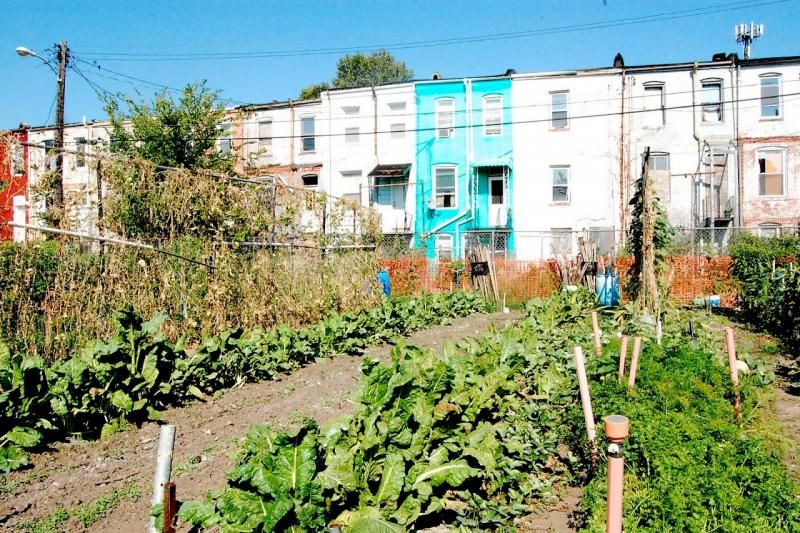 CLC works with community gardens - this is Duncan Street Miracle Garden