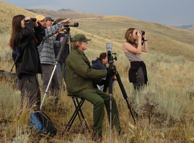 Observing Yellowstone wildlife