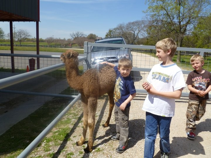 Evan with Batman the baby camel