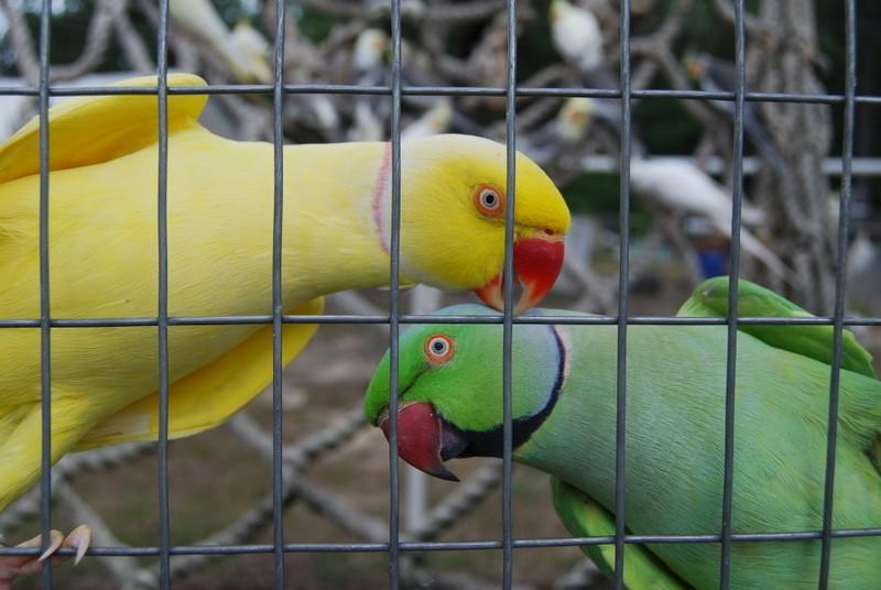 Bert and Freddie