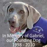 In Loving Memory of Gabriel, our Founding Dog