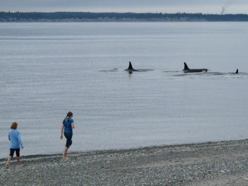 July 2009, girls enjoying our orca neighbors at Bush Pt!